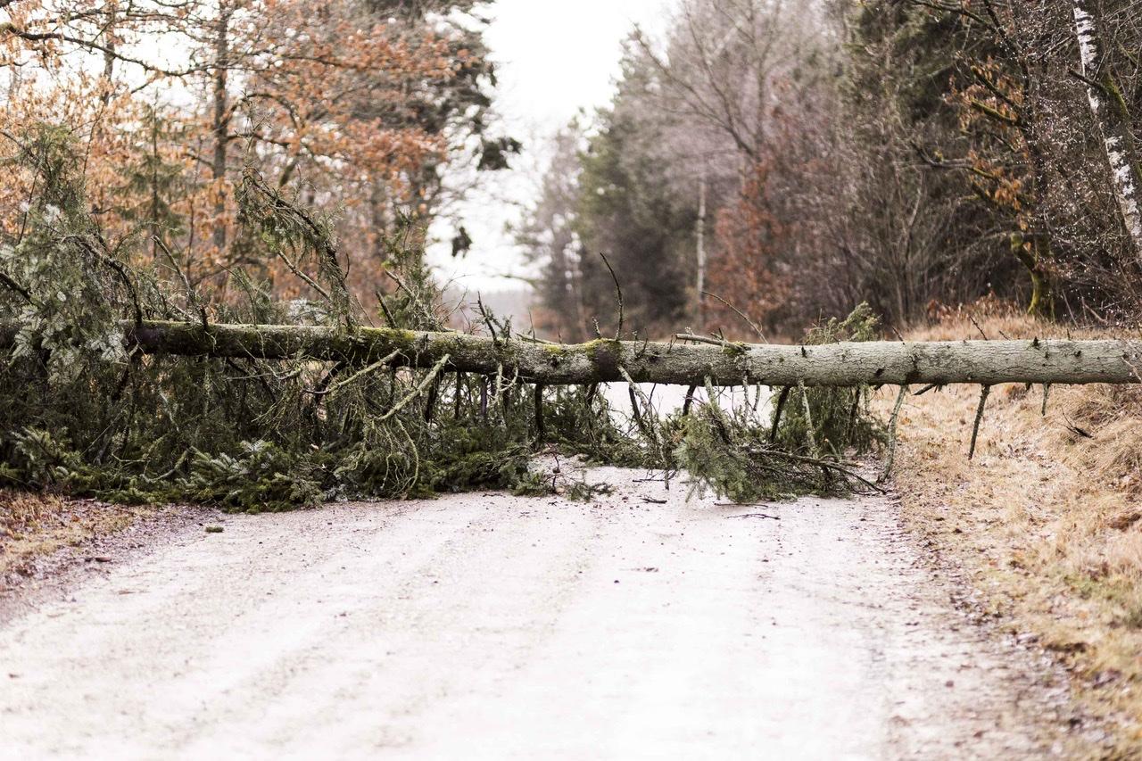 Væltet træ spærrer vej