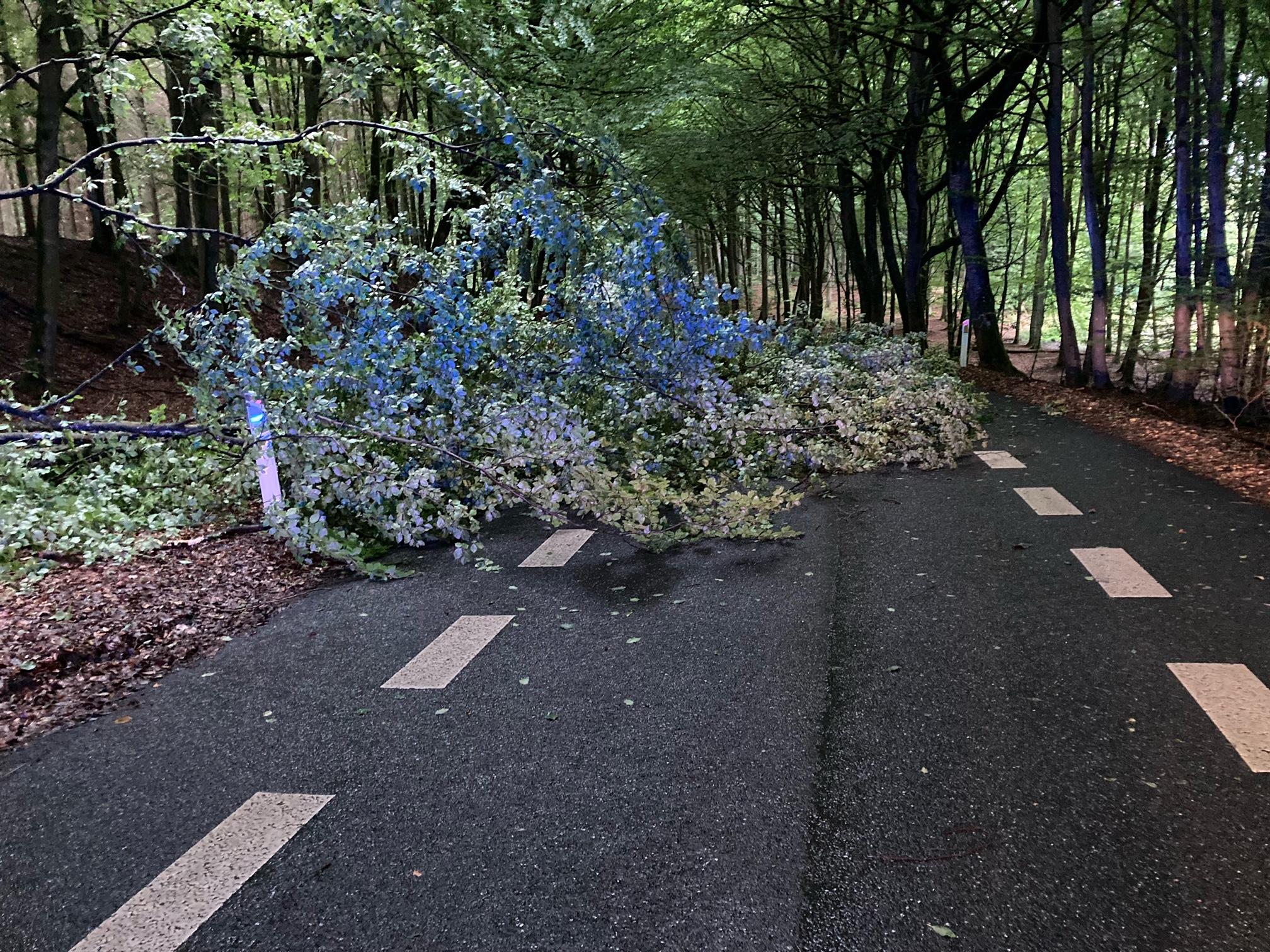 Væltet træ spærrer vej i Allerød