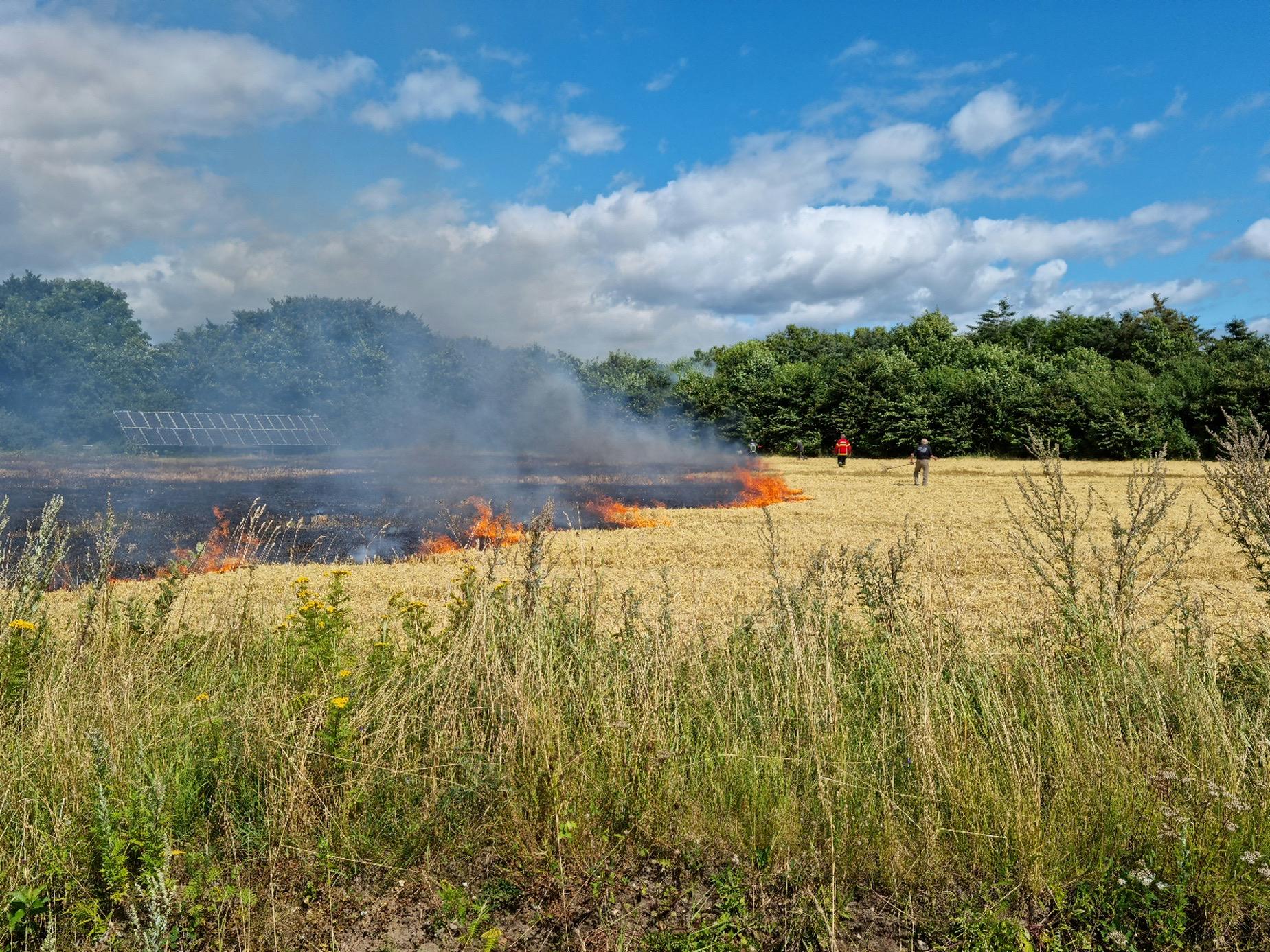Mark med afgrøder brudt i brand